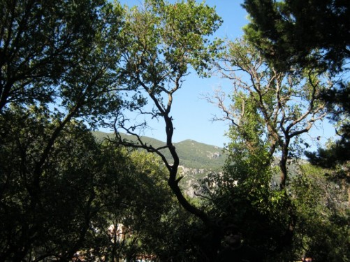 Trees around Paleokastritsa Monastery.