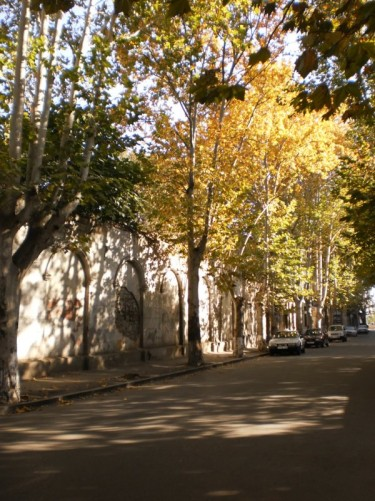 View along a tree-lined residential street.