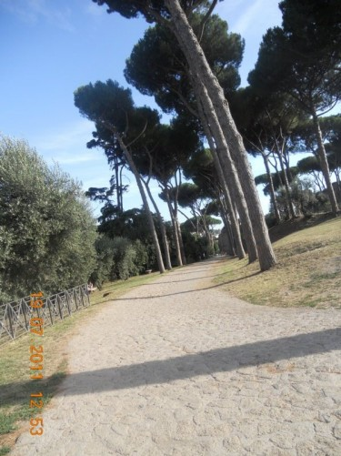 Tree-lined path at Palatine Hill.