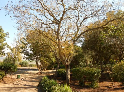 Path through the gardens at Chellah.