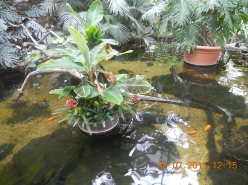 Fish in a pond, indoor plaza.