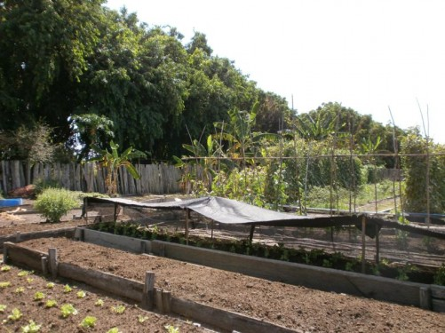 A garden with vegetables growing at Rock View Lodge.