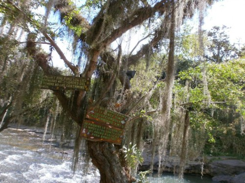 A tree with long beard-like strands of moss dangling from its branches. Taken at Pozo Azul (Blue Lagoon), a natural pool, which is used for swimming. It's a 10-minute car ride out of town.