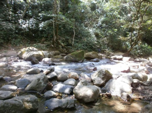 River full of weathered rocks. Surrounding trees and vegetation.