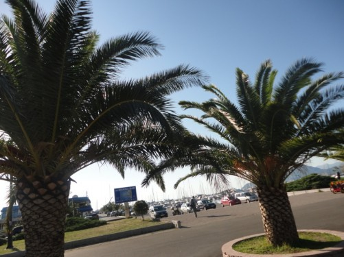 Looking towards the harbour in Bar. A pair of palm trees in the foreground.