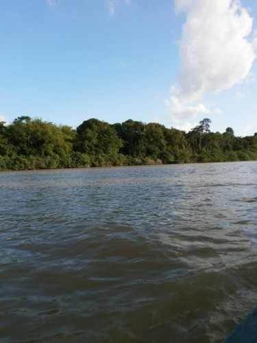 In a traditional canoe looking across a river to dense vegetation on the far bank.