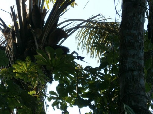 Looking up into trees. The silhouette of a small animal can be seen - probably a type of small monkey.