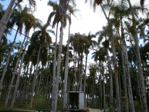 The Palm Gardens (Palmentuin) located near Independence Square. Hundreds of tall palm trees.