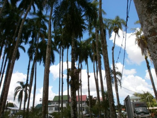 At the edge of the palm garden. Colonial-era wooden houses beyond.
