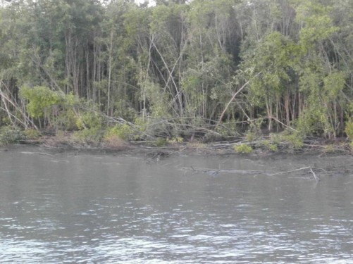 Tall trees and vegetation lining the river bank near the jetty.