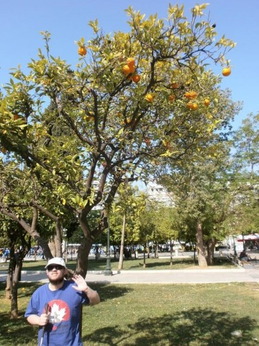 Tony standing under an orange tree in Syntagma Square in central Athens. Syntagma Square is named after the Greek constitution (syntagma) that was proclaimed from the balcony of the royal palace that overlooks the square on 3rd September 1843. The palace is now the Greek parliament building.