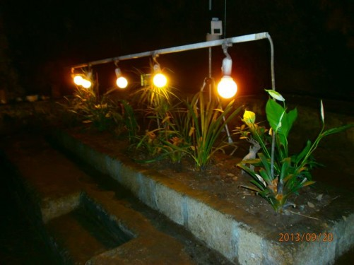 A row of plants growing under artificial light.