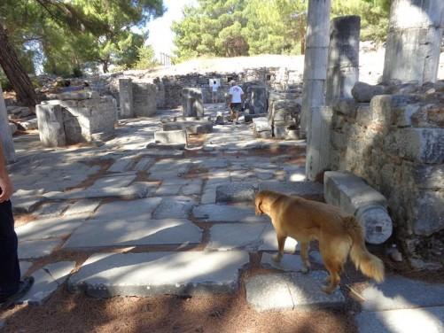 Remains of a Byzantine church. A stray dog wondering in front.