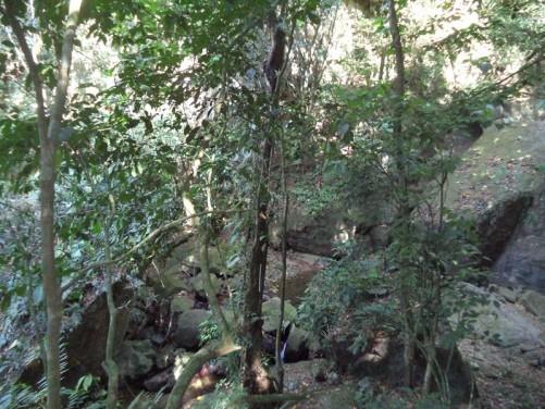 Jungle near Chorro Yayas (Yayas Waterfall) near El Cope.