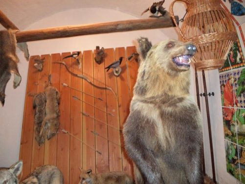 A stuffed brown bear in the Hunter's room. The castle was originally a royal hunting lodge for the King.
